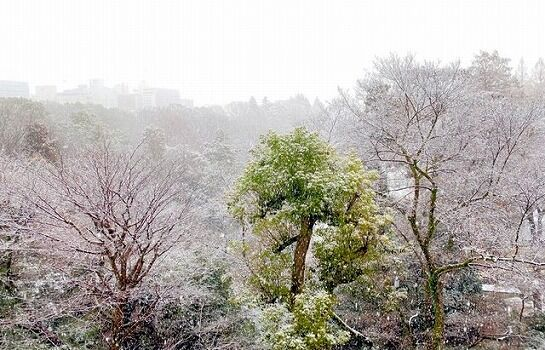 【速報】東京、雪