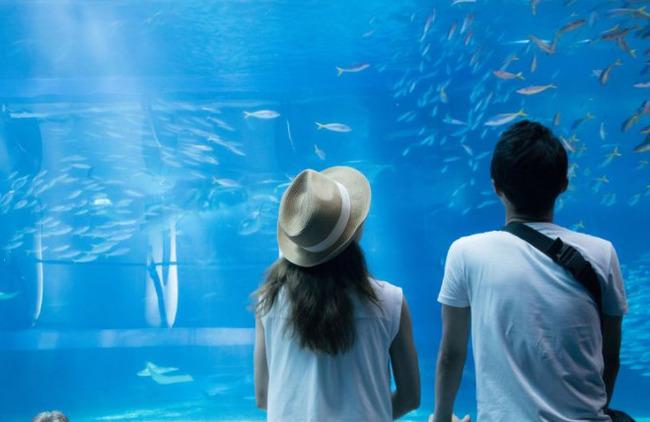 【急募】付き合ってない女の子を水族館デートに誘うのってアリ?