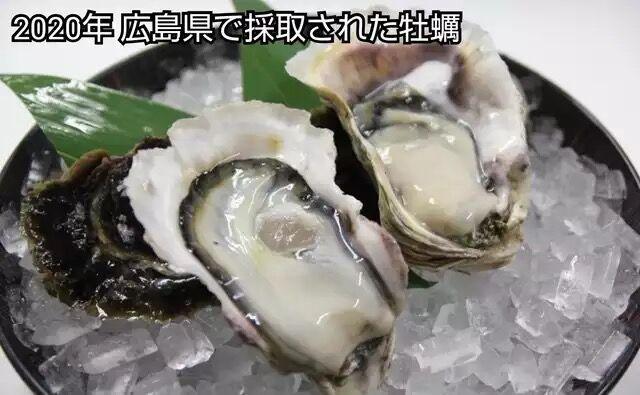 東京湾で採れた牡蠣wwwwwwww