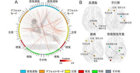 【脳科学/スポーツ科学】世界クラスの体操競技選手は脳のネットワーク構造が特徴的、順天堂大が確認